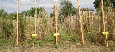 Προς βιοκαλλιεργητές: Μέχρι 20 Νοεμβρίου οι αιτήσεις άδειας χρήσης μη βιολογικών σπόρων για χειμερινά σιτηρά
