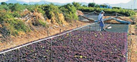 Παράταση παράδοσης ξηρής σταφίδας στις μεταποιητικές για την συνδεδεμένη ενίσχυση