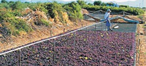Ελληνογερμανικές συνεργασίες για το ελληνικό κρασί και τη σταφίδα