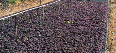 Σύμβαση για την παραγωγή αγροτικών προϊόντων με ηλιακή ενέργεια στην Κρήτη