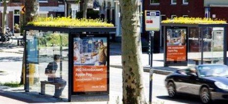 «Φιλόξενες» για μέλισσες στάσεις λεωφορείων στην Ολλανδία