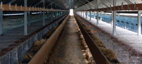 Πάργα: Έκπτωση 70% στα δημοτικά τέλη μόνο για κτηνοτρόφους