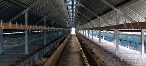 Κτηνοτρόφος στην Κρήτη βρήκε τα πρόβατά του σφαγμένα