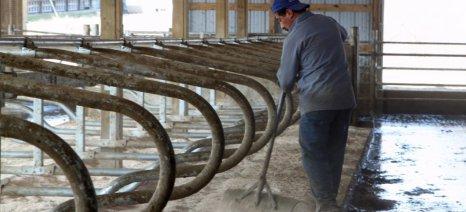 Ολλανδικό σχέδιο μετατροπής περιττωμάτων αγελάδων σε βιοαέριο, ύψους 150 εκατ. ευρώ