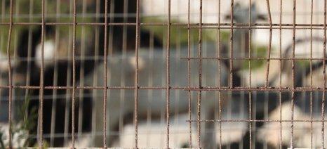 Πόλεμος ξέσπασε μεταξύ των συνδικαλιστών γεωπόνων και της ηγεσίας του ΟΠΕΚΕΠΕ, με θύμα τα Βιολογικά