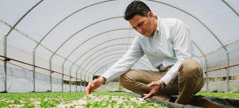 Stevia Hellas: Ο Συνεταιρισμός που θέλει να κατακτήσει τις διεθνείς αγορές