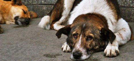 Επανέρχεται το νομοσχέδιο για τα ζώα συντροφιάς από το ΥΠΑΑΤ