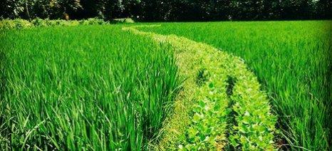 Ενημερωτική εκδήλωση από το ΑΠΘ για τα νέα συστήματα συγκαλλιέργειας