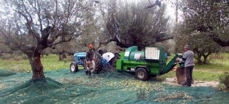 Εργατικά χέρια για τις ελιές αναζητά το Εργατικό Κέντρο Ηρακλείου για λογαριασμό των καλλιεργητών