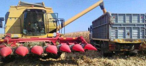Η Κίνα ανακοίνωσε τις εκτιμήσεις της για την παραγωγή καλαμποκιού, μετά από 10 χρόνια «παραπλάνησης»