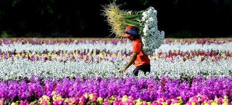 Στο μειωμένο συντελεστή ΦΠΑ τα κομμένα άνθη