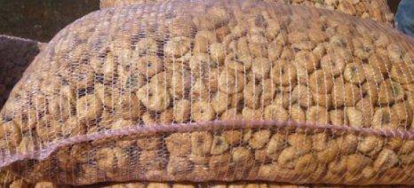 Συνολικά 1.800 τόνους ξερών σύκων παρέλαβε φέτος η Συκική