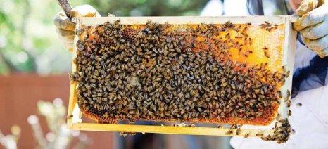 Συνέδριο επαγγελματικής μελισσοκομίας στα Ιωάννινα