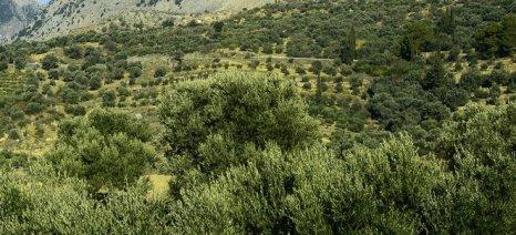 Στόχους για ποιοτική αναβάθμιση του βιολογικού ελαιολάδου βάζει ο Αγροτικός Συνεταιρισμός Άδελε