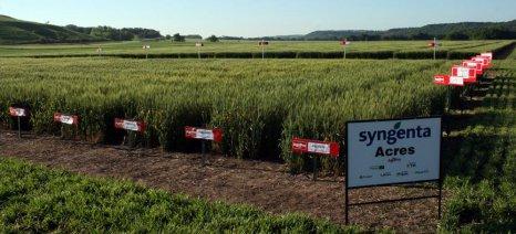Πρόθυμη η Syngenta να υποστηρίξει αιτήματα αγροτών για χρήση των νεονικοτινοειδών