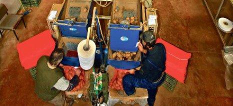"""Η πατάτα Νευροκοπίου θέλει ένα """"ΠΟΠ"""" για να μη φεύγει ατυποποίητη από το νομό Δράμας"""