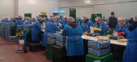 Πρόσληψη εργατών για το συσκευαστήριο του Αγροτικού Συνεταιρισμού στη Νεάπολη Αιτωλοακαρνανίας