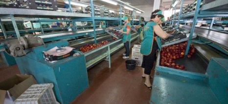 Αναπτύσσεται ο κλάδος των τροφίμων και ποτών στην Ελλάδα της κρίσης, σύμφωνα με το ΙΟΒΕ