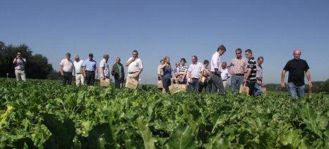 Με νέα απόφαση για την Ολοκληρωμένη Διαχείριση στα τεύτλα απαγορεύεται η αλλαγή των αγροτεμαχίων από χρονιά σε χρονιά