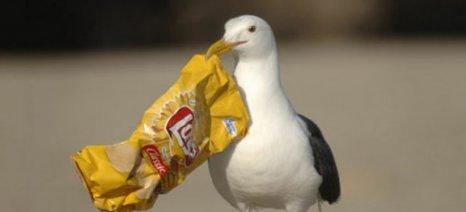 Έρευνα: Το 90% των θαλασσοπουλιών έχουν φάει πλαστικά