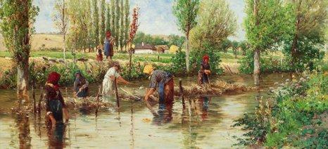 Η ιστορία της καλλιέργειας κάνναβης στην Ελλάδα μέχρι το αποκορύφωμά της τον 20ό αιώνα