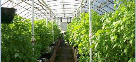 Εγκαίνια στο Ερατεινό για το πρώτο θερμοκήπιο που λειτουργεί με γεωθερμική ενέργεια