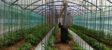 Η Ρωσία ξεκινά τη μαζική παραγωγή λαχανικών σε θερμοκήπια
