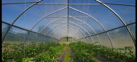 Οι κυριότερες ασθένειες της ντομάτας στο θερμοκήπιο και πώς θα τις καταπολεμήσετε