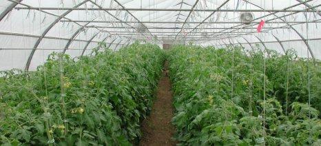 Οι ειδικοί της Rivulis-Eurodrip απαντούν σε 7 ερωτήσεις των καλλιεργητών θερμοκηπίου για την άρδευση