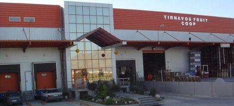 Συνεργάτες-παραγωγούς φυλλωδών λαχανικών ψάχνει ο συνεταιρισμός Tirnavos Fruit