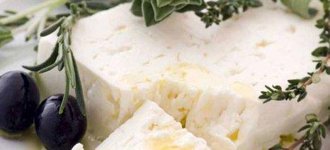 Έρευνα για καινοτόμα παραδοσιακά τυροκομικά προϊόντα με οφέλη για τους κτηνοτρόφους της Ηπείρου