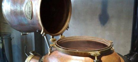 Γιορτή Τσίπουρου στο παραδοσιακό καζάνι Σαγιά στον ελαιώνα των Μανιταριών Δίρφυς