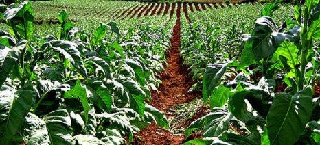 Ευφυής γεωργία στην καλλιέργεια καπνού