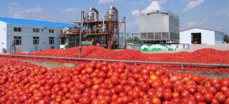 Νέο καμπανάκι για τη στρεμματική ενίσχυση σε βιομηχανική τομάτα και Κορινθιακή σταφίδα