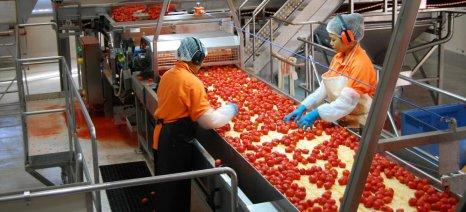 Περισσότερες ντομάτες επεξεργάστηκαν τα εργοστάσια πελτέ στην Ιταλία