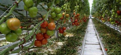 Επιβεβαιώνεται η τεράστια αύξηση των εισαγωγών από το Μαρόκο στην Ε.Ε.