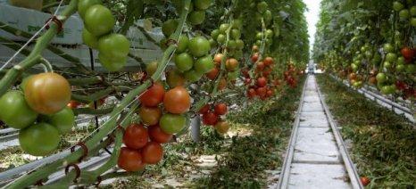 Στα ίδια επίπεδα με πέρσι οι φετινές φυτεύσεις στα θερμοκήπια της Ιεράπετρας
