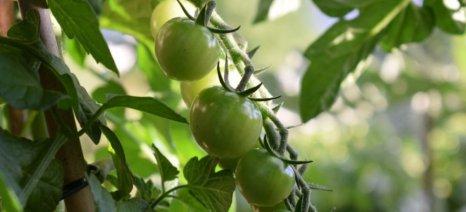 Αν. Δημοσχάκης: «Βατερλώ» το Μέτρο 11 για τις Βιολογικές Καλλιέργειες