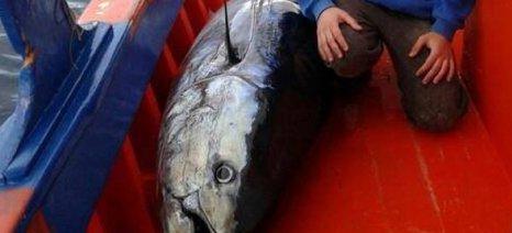 Τόνο 195 κιλών ψάρεψε 17χρονος στην Εύβοια