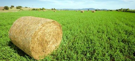 Ενημέρωση για τους καλλιεργητές μηδικής του Α.Σ. Λαρισαίων Αγροτών την Παρασκευή