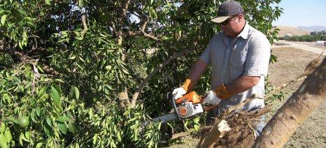 Κρούσμα τριστέτσας σε φυτώριο στην Κορινθία - τι πρέπει να προσέξουν οι παραγωγοί εσπεριδοειδών