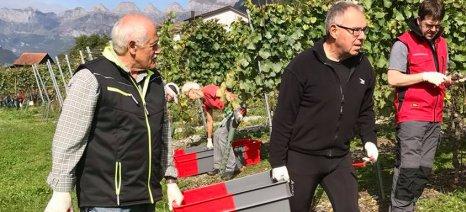 Στο -10% εκτιμάται η πτώση της παραγωγής κρασιού στην Ιταλία