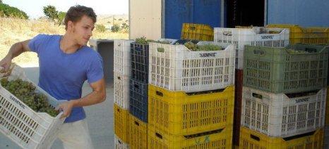 Μέχρι 31 Δεκεμβρίου παρατείνεται η προθεσμία υποβολής δηλώσεων συγκομιδής αμπελοοινικών προϊόντων