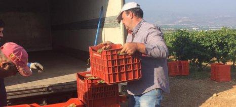 Επανεξελέγη ο Γιώργος Σκούρας πρόεδρος του ΔΣ του Ελληνικού Συνδέσμου Οίνου