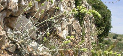 Ομάδα εργασίας για τα αρωματικά και φαρμακευτικά φυτά συστήνει το ΥΠΑΑΤ