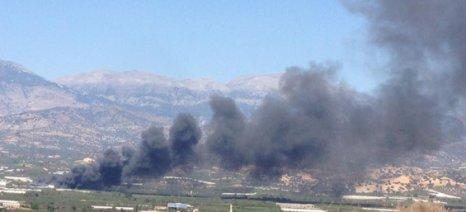Αναγκαίες παρεμβάσεις σε πληγείσες καλλιέργειες από πυρκαγιές