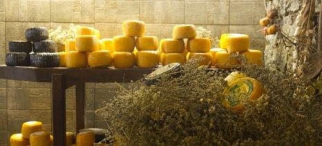 Ιδρύθηκε αγροδιατροφικό cluster με την επωνυμία «Κρητικό Τυρί»