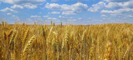 Η Ρωσία θα κατασκευάσει νέο τερματικό σταθμό σιτηρών στην Κριμαία