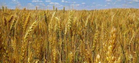 Ανοίγει η Κινεζική αγορά στα Ρωσικά αγροτικά προϊόντα