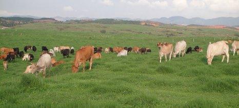 Κατανεμήθηκαν οι βοσκότοποι – εντός 30 ημερών οι ενστάσεις των κτηνοτρόφων